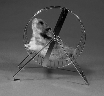 Dem Hamsterrad entfliehen